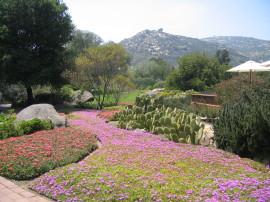 Rancho La Puerta views of flower bed, cacti, trees, mountain Kuchuma